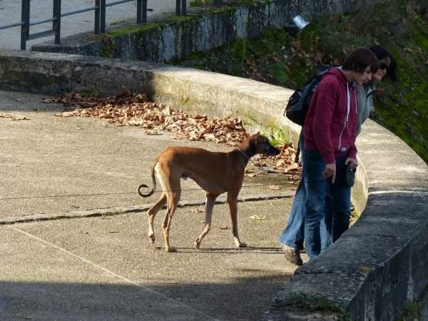 Tournus-13-10-2003-chien