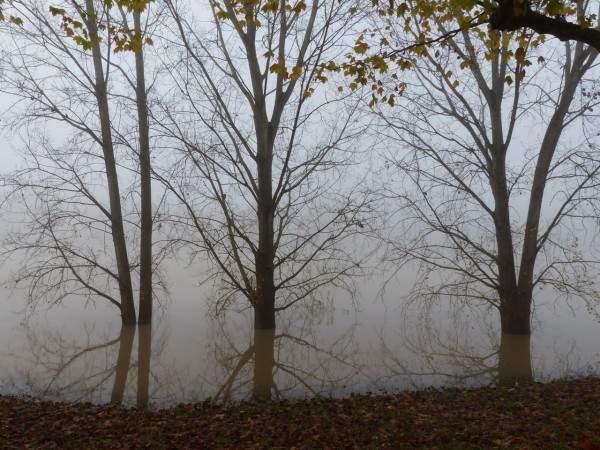 tournus-automne-arbre