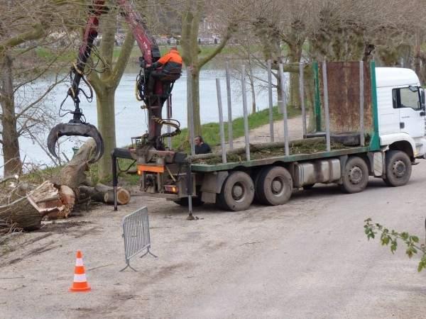 elagage arbres tournus quai georges bardin