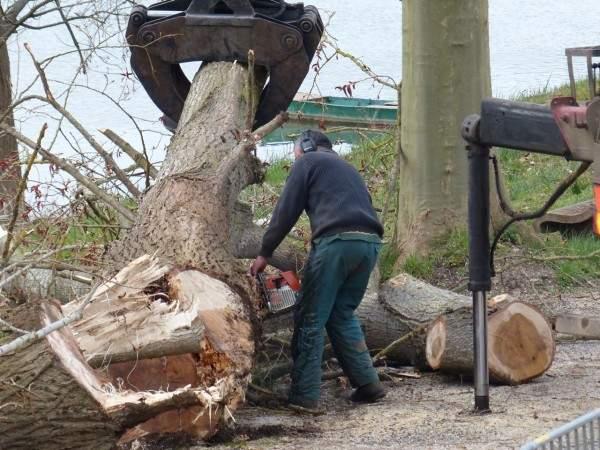 elagage arbres tournus tronconneuse