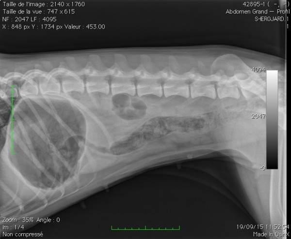 Chika radiologie1